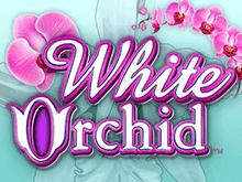 Игровой автомат Белая Орхидея